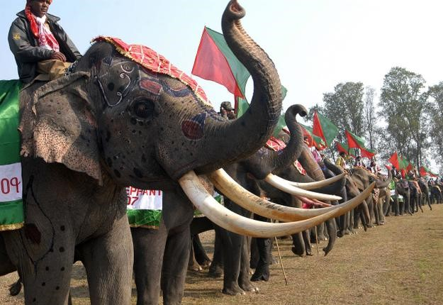 Image result for gujarat elephant festival