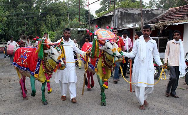 Pola Festival, Maharashtra India 2019 Dates, Festival ...